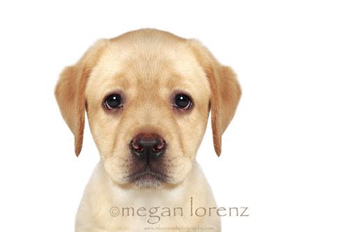 The Sad Puppy Face by Megan Lorenz