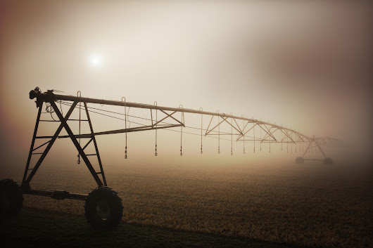 Farm fog haiku