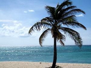 Palm Tree Fertilization