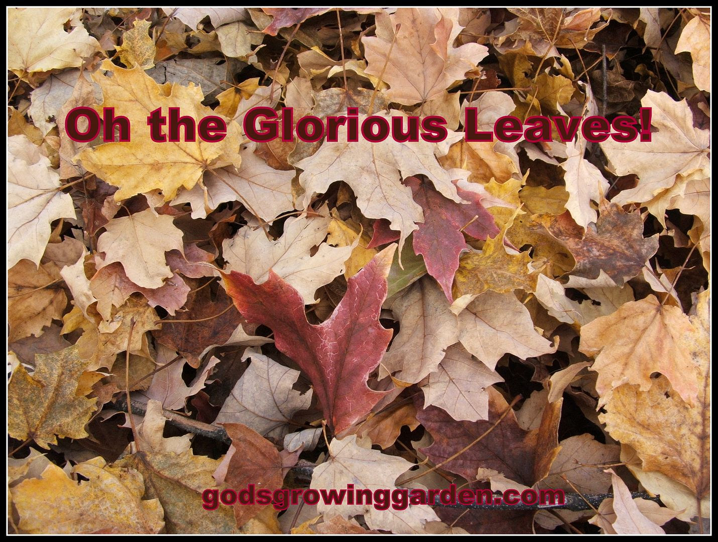 Glorious Leaves by Angie Ouellette-Tower for godsgrowinggarden.com photo 004_zps5cd8848d.jpg