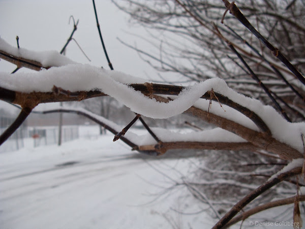 snow on a tree branch