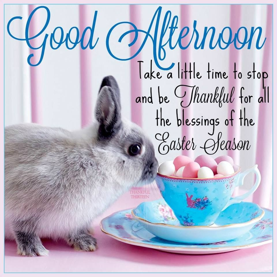 Good Afternoon Easter Quote Pictures Photos And Images For