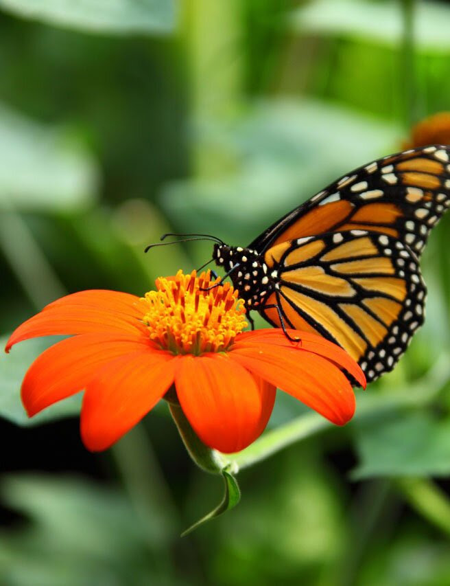 Orange flower and butterfly, 35 best flower photos