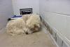 Un perro terriblemente enfermo desafía a la muerte y escapa en un avión hacia la libertad