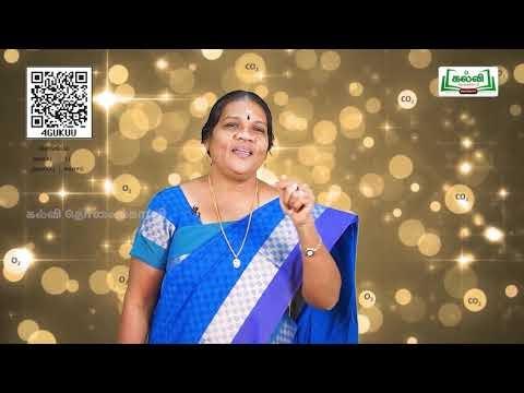 11th Zoology சுவாசம் அலகு 6 பகுதி 3 பாடம் 1 Kalvi TV