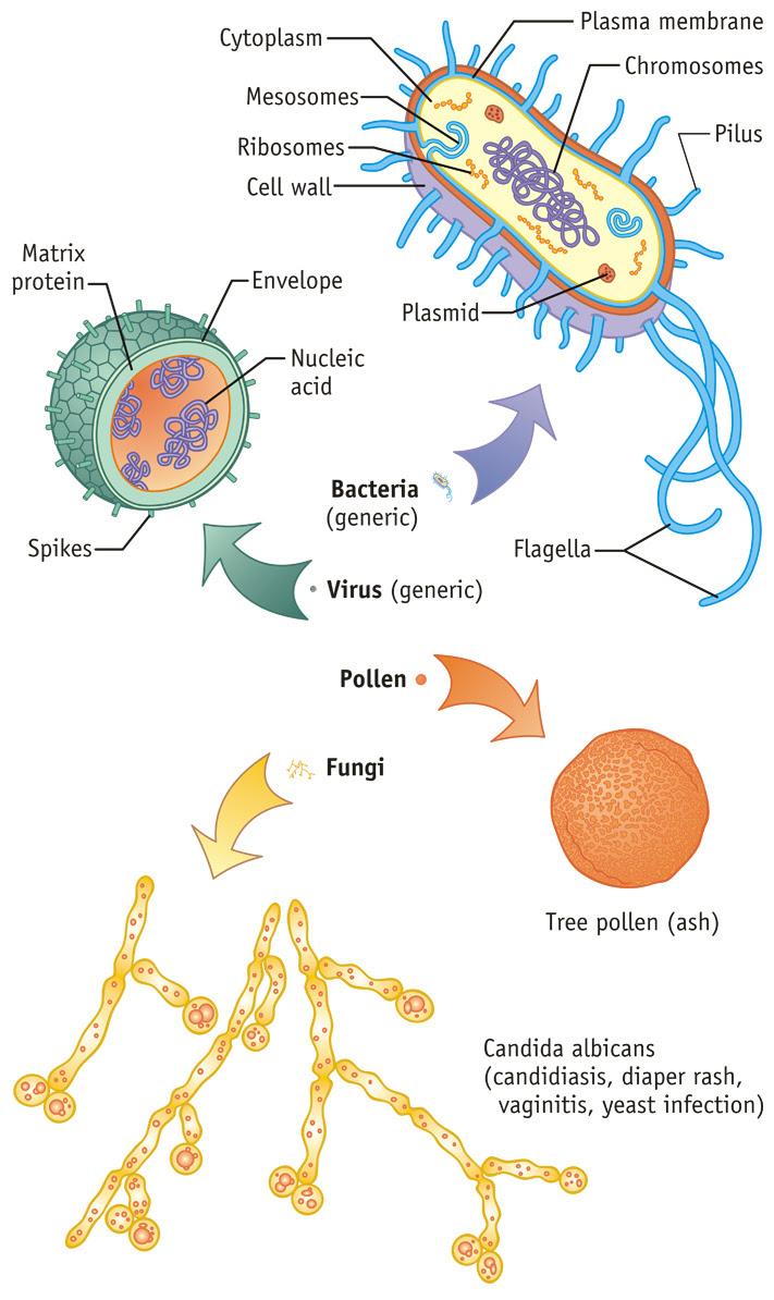 bacteria fungus virus etc_711x1194