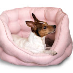 Duke and Darling Pink Plush Pet Bed, Machine Washable, Slip Resistant, Safe Materials, Removable Cushion, Ultra Comfort - Blush Pink