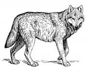 WOLF Coloring Pages Color Online Free Printable