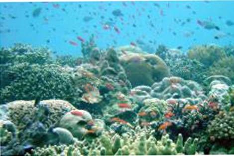 Arrecife de Coral en Indonesia.   Science