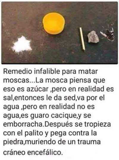 Imagenes graciosas google - Como matar las moscas de mi casa ...