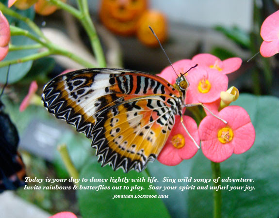 Butterflies Quotes And Sayings Quotes About Butterflies