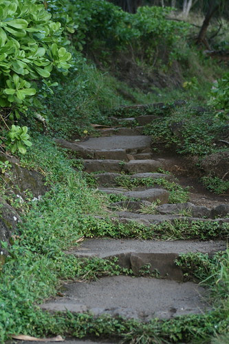 An Upward Path by gina.blank