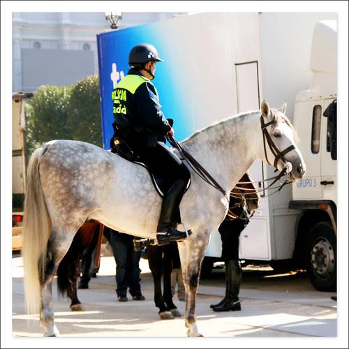 policia montado