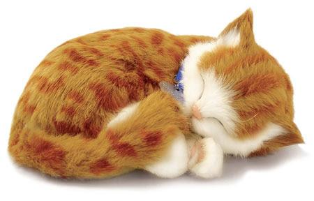 Download 100+  Gambar Boneka Kucing Yang Lucu Terbaik