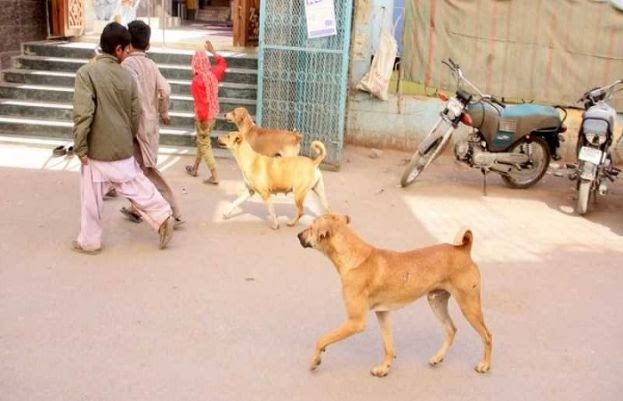Khairpur: Minor dies after being attacked by stray dogs