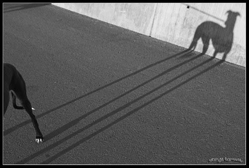 Planimetria d'un gos por Sergi Bernal