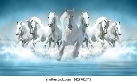 7 White Horse Wallpaper Download Wallpaper Galaxy
