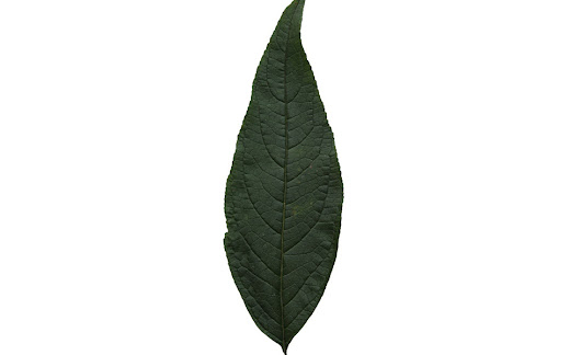 Free high resolution leaf texture | Free Cut Out people, trees and leaves