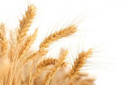 Foods that contain gluten. What Foods contain gluten?