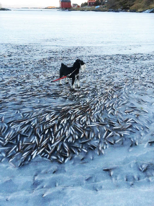 Sea froze so fast that it killed thousands of fish instantly ~ The Great Red Comet -Earth Science Chronicles