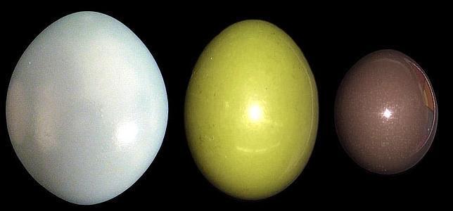 El huevo de ave que brilla como un espejo