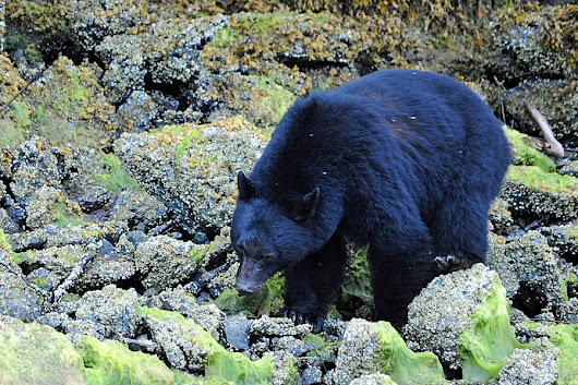 The Wildlife of Canada's Clayoquot Sound - Travel with Kat