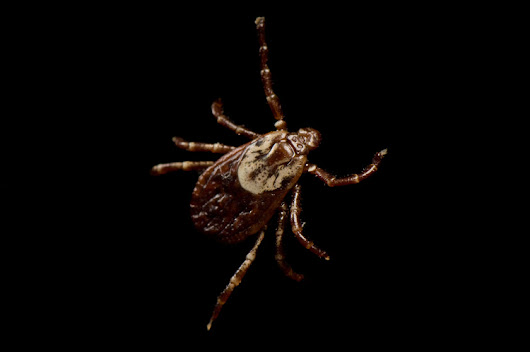 A Tick Bite Could Make You Allergic to Meat—and It's Spreading (National Geographic)