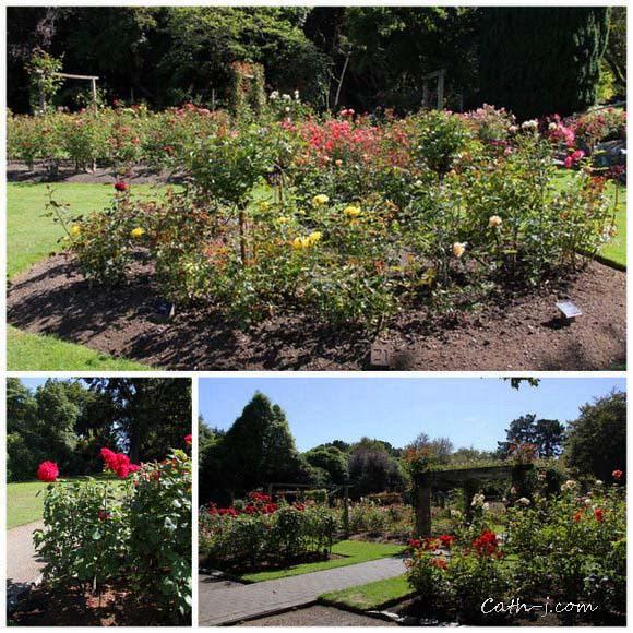 Rose Garden Invercargill Nzealand_11