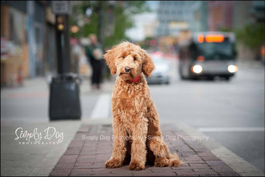 New location | German Village | Columbus Ohio Dog Photographer