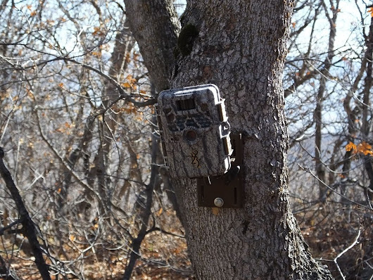 How to Camouflage a Trail Camera and Keep Them Secure -
