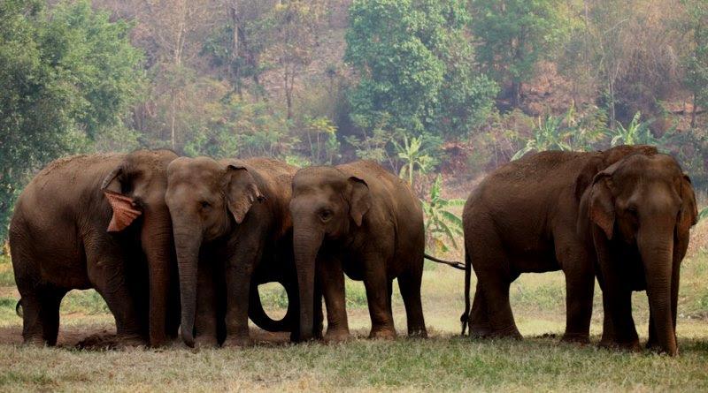 global_sanctuary_for_elephants-divulgacao