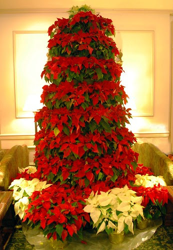 Pointsettia Tree in the Hawthorne Lobby