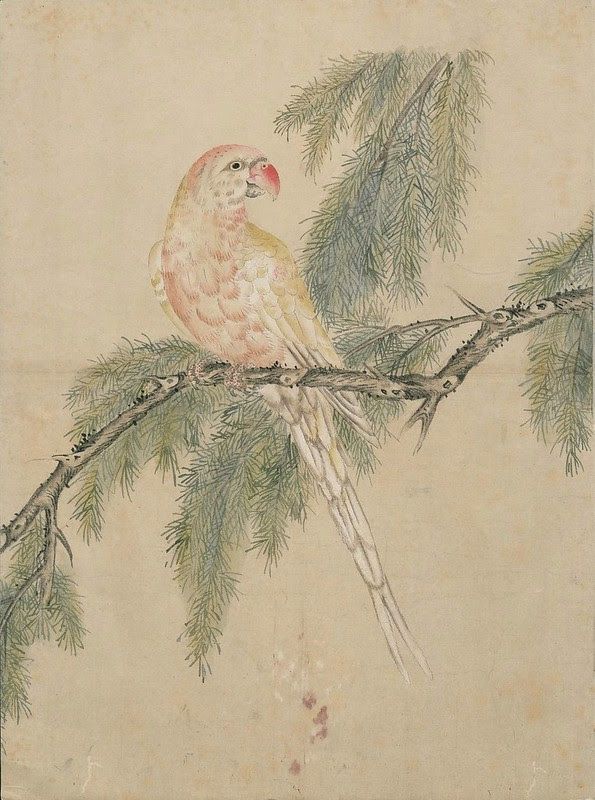 Ink + Watercolour  Bird sketch j
