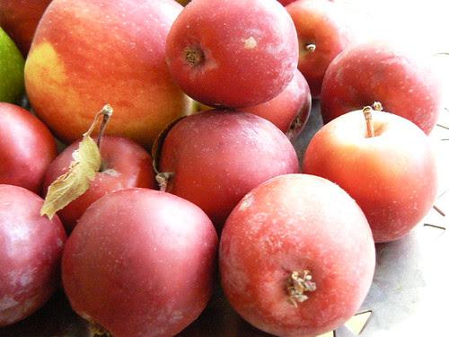 Crab Apples by Ayala Moriel
