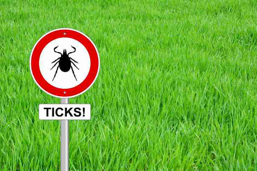 Lyme Disease: 13 Common Myths Exposed | Mastering Health and Happiness
