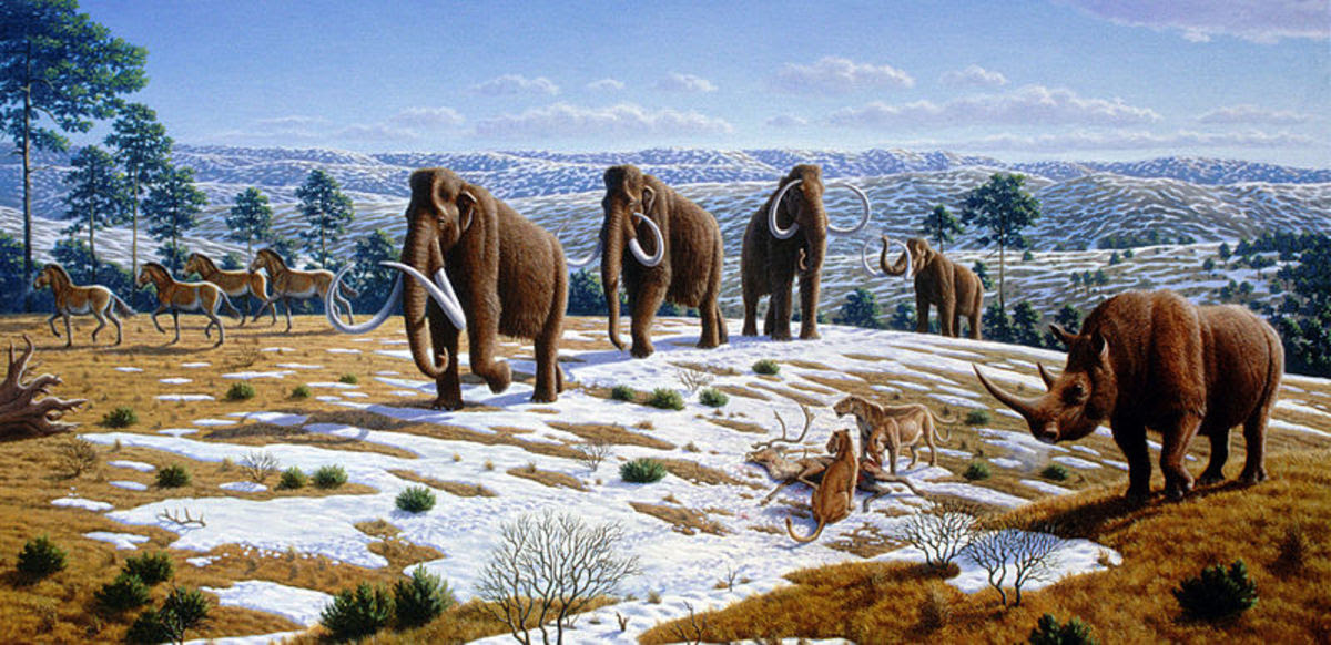 Around 10,000 years ago, Ice Age icons such as the woolly mammoth, woolly rhino and sabre-tooth cat vanished as a direct result of human over-hunting.