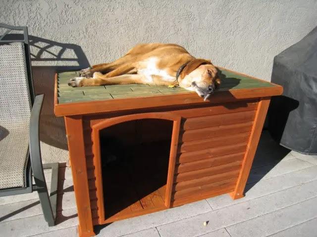 Labrador dog house plans guide dt donto for Dog house for labrador retriever