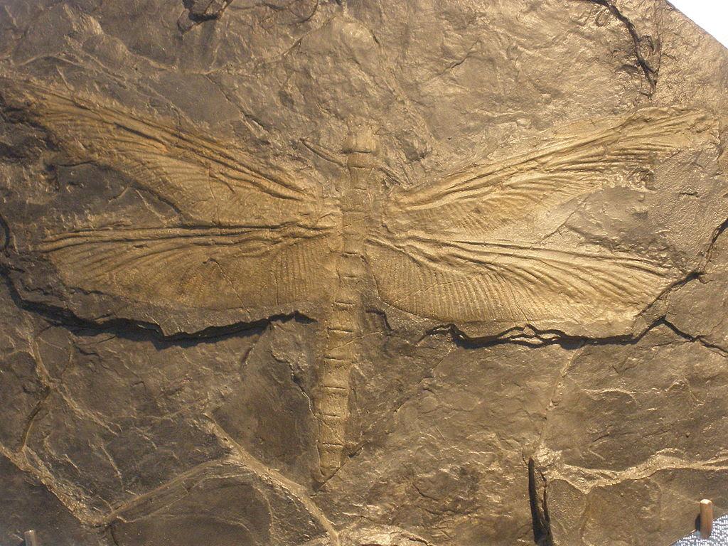 Libélula Meganeura