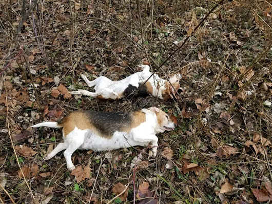 PETITION: Justice for Dogs Shot and Left Abandoned in Field