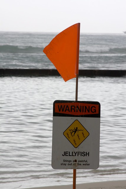 warning - jellyfish