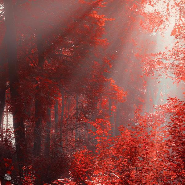 Ildiko Neer-Light Over Us - Forrest Photography by Ildiko Neer  <3 <3