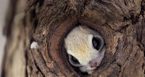 Squirrel hiding in a tree   Teh Cute