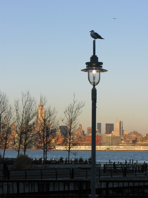 a gull on a lamppost on the Hudson River, Empire State Building behind trees