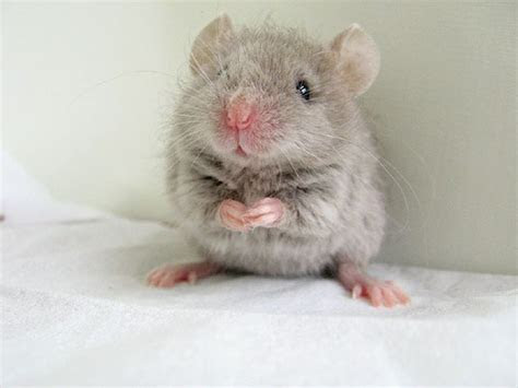 EgoMouse images Cute mouse i found on the internet :D wallpaper and background photos (16282072)