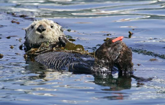 Monterey, CA – Wildlife, Great Food & More - Authentic Luxury Travel