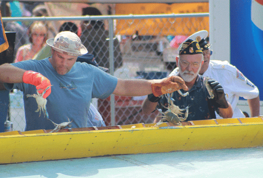 Blue Crabs Race at the National Hard Crab Derby - Crisfield, MD
