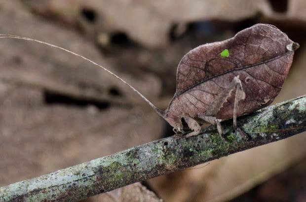 Camouflaged Animals