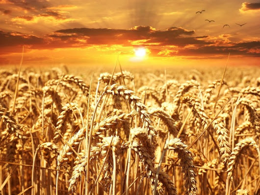 Guest author: Sarah Brentyn ~ Be the Grain You Were Meant to Be