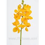 Yellow Mokara Orchids (60 stems)