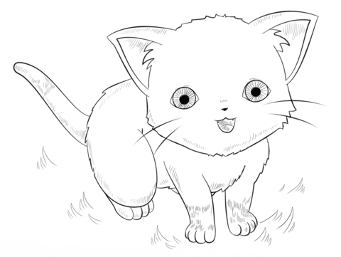 650 Top Coloring Pages Anime Cat  Images
